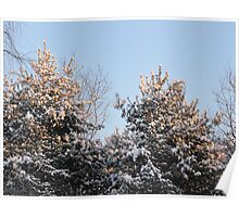 Glistening Morning Pines for Martin Luthor King Poster