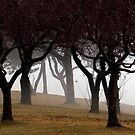 Trees in Fog on Lakeshore Drive by James Lady