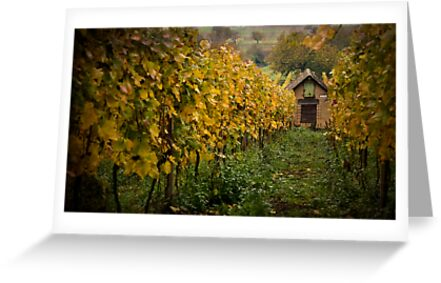 Vineyard Shed by Boston Thek Imagery
