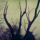 #003 by Paul Desmond