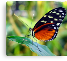 Macro Orange and Black Butterfly Canvas Print