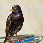 Subway Bird by Garfungus