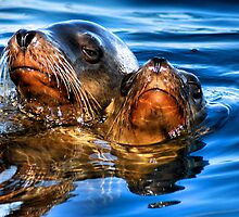 Sea Lions by SueAnne