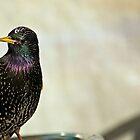 Subway Bird 2 by Garfungus