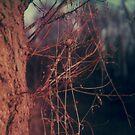#008 by Paul Desmond