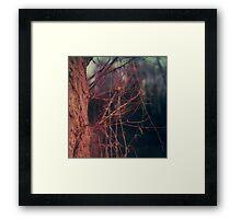 #008 Framed Print