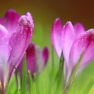 Spring is here at last! by miradorpictures