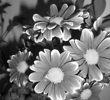 Black and White Flowers by karenuk1969