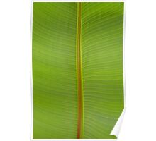 Tropical Lime Green Jungle Leaf Vein Stripe Pattern Poster