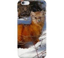 Pine Marten,(Sable) iPhone Case/Skin
