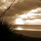 Sun Shining Brown  by Tom Douce