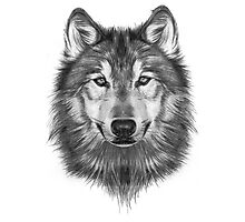 Wolf Head Photographic Print