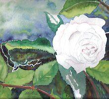 White Rose of Virginity by Enoeda