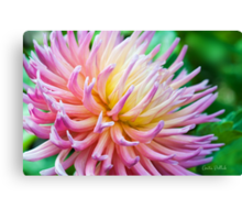 Dahlia in her Glory Canvas Print