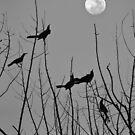 Moonlight serenade by LMarinho