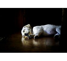 In Dreams by Roy Orbison Photographic Print