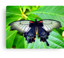 Black Spring Butterfly Canvas Print