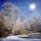Three birds around the sun by Philippe Sainte-Laudy
