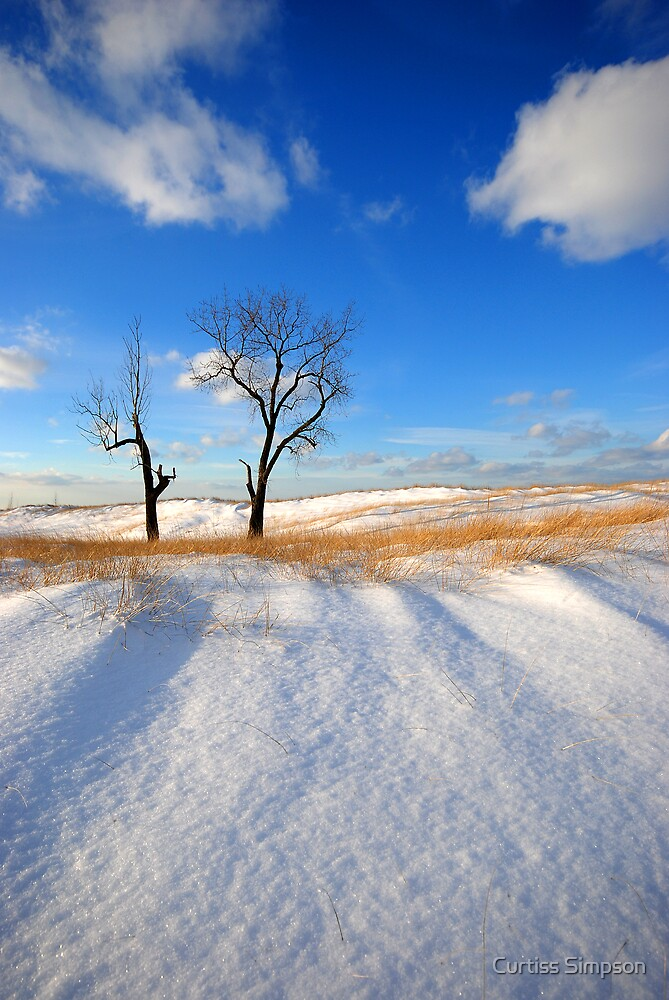 A Beautiful Winter's Day by Curtiss Simpson