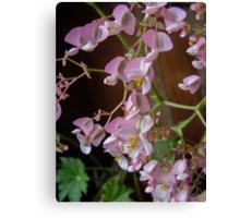 Delicate Fibrous Begonia Canvas Print