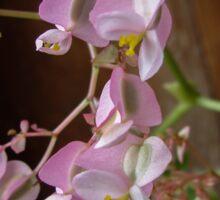 Delicate Fibrous Begonia Sticker