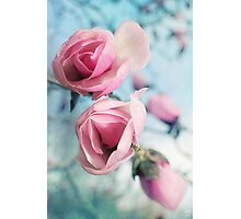 Laura Ashley Inspired Springtime Magnolias on Blue Sky Photographic Print