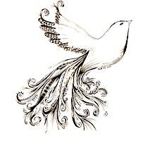 Dove of Peace by kaumalbaigart