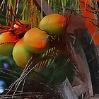 Coconut Palm Tree and Coconuts by Vickie Emms