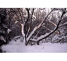 A Snowy Scene Photographic Print