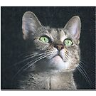 Dyna the cat by Roxane Bay