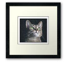 Dyna the cat Framed Print