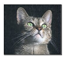 Dyna the cat Photographic Print