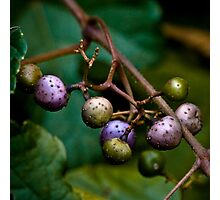strange fruit Photographic Print
