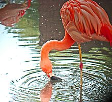 Flamingo Swirl by Al Bourassa