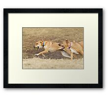 Gracie and Unkown Framed Print