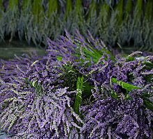 Lavender Bundles by Catherine Sherman