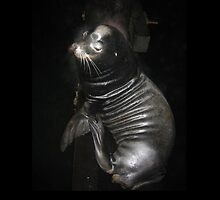 Seal Life by LostaFish