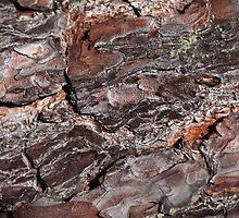 Pine Bark by Zosimus