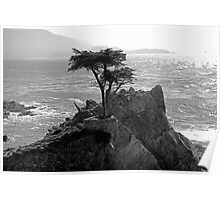 Lone Cypress--Monterey California  Poster