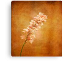 Pink Tuft Canvas Print