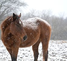 Chestnut Horse Watching the Herd During Light Snowfall by davidpurcell