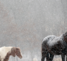 Horses Standing Quietly on a Hilltop in Light Snowfall Sticker