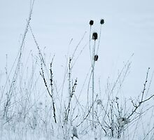 Winter Grass No.1 by leslie wood