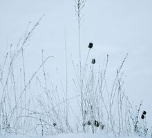 Winter Grass No.2 by leslie wood