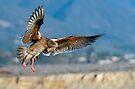 Flight by Eyal Nahmias