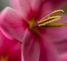 Shades Of Pink by Jenni77