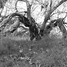 tree with a twist by coastie