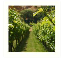Sunshine & Vines Art Print