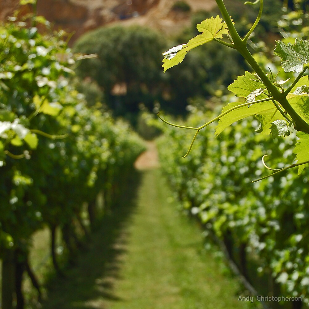 Sunshine & Vines by Andy  Christopherson