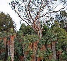 Pandanis Stand - Cradle Mountain National Park, Tasmania by Ruth Durose